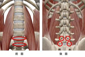 腰の6点構造